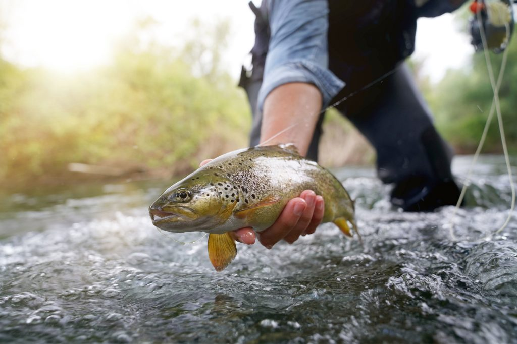 Man holding a trout he caught fishing