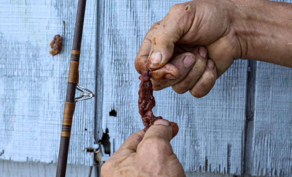 Man demonstrating how to bait a hook with beef liver to catch catfish