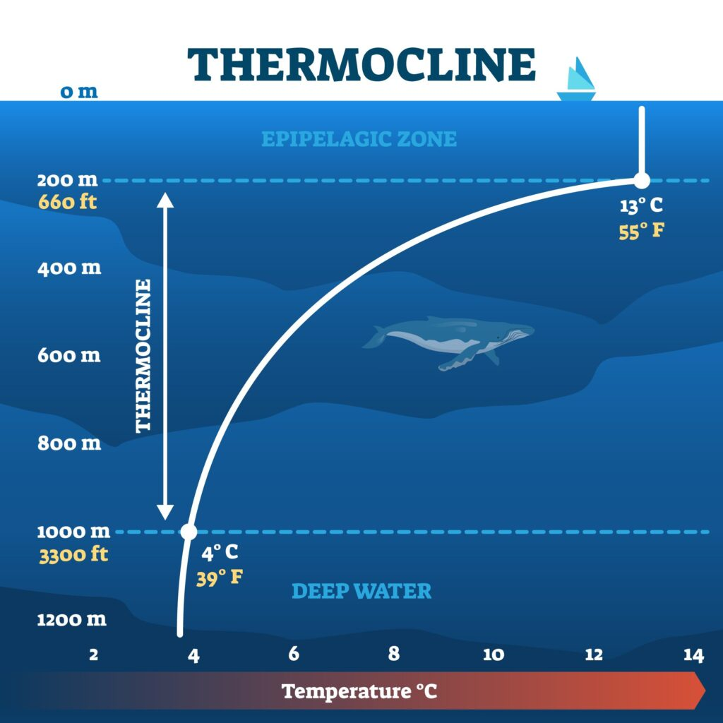 what is a thermocline