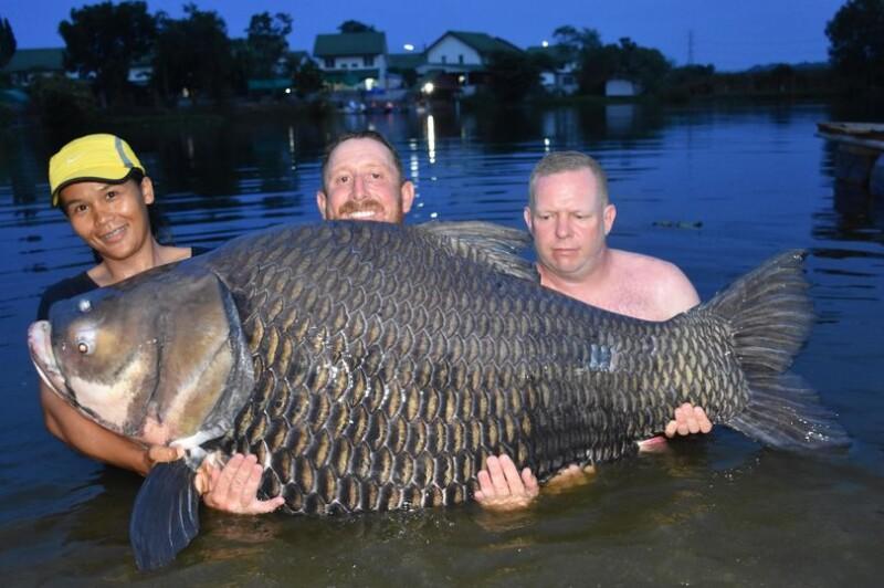 worlds biggest carp caught by john
