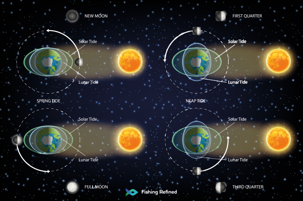 monthly lunar and solar tides in four periods illustration